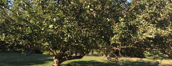 The Newton Apple Tree is one of 111 Places in Washington You Must Not Miss.