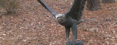 Carolina Raptor Center is one of Lugares favoritos de Lulu.
