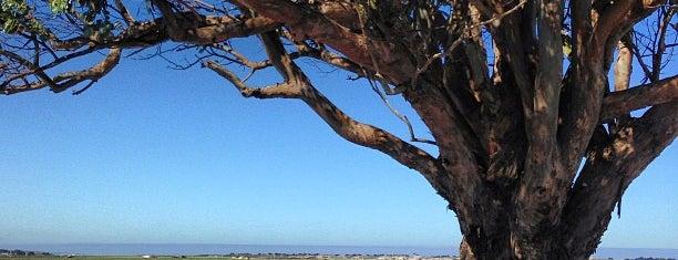 Artichoke Capitol Of The World is one of HWY1: Santa Cruz to Monterey/Carmel.