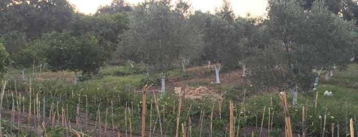 Ataer çiftliği, Yakaköy-Bodrum is one of Orte, die 👣PinaCan gefallen.