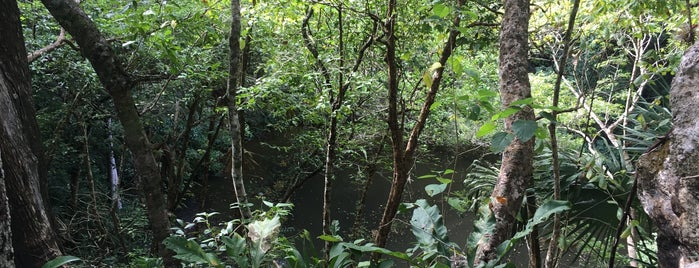Cenote Xtoloc is one of Buitenland.