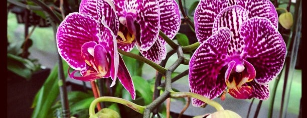 Pac 8 Orchids is one of Lugares favoritos de Victor.
