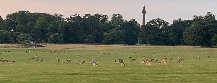 Holkham Park is one of NFLK.