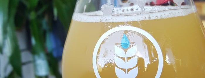 Pure Project Brewing is one of Posti che sono piaciuti a DFB.