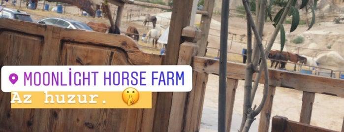 Moonlight Horse Farm is one of Locais curtidos por Hani.