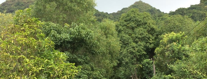 Vườn Quốc Gia Cát Bà (Cat Ba National Park) is one of Michaelさんのお気に入りスポット.