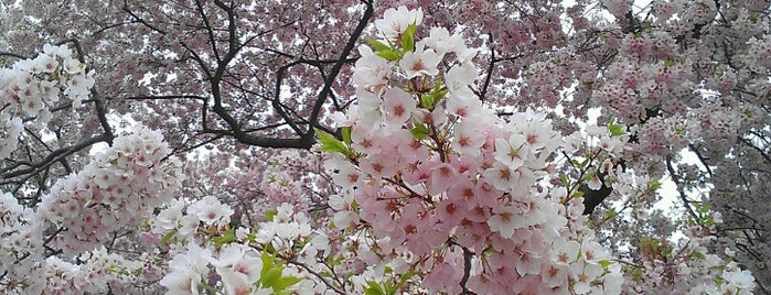 National Cherry Blossom Festival, Inc. is one of worth re-exploring.