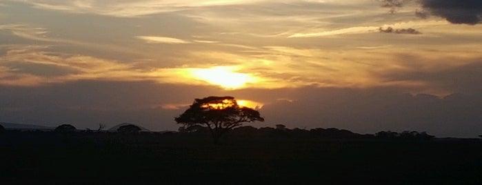 Amboseli National Park Kenya is one of Locais curtidos por Anton.