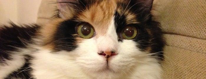 猫喫茶 猫の箱 is one of Favorite Cats.