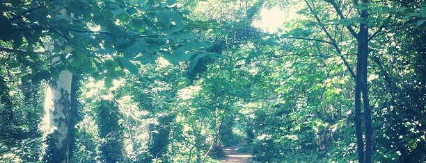 Gunnersbury Triangle is one of 1000 Things To Do In London (pt 2).