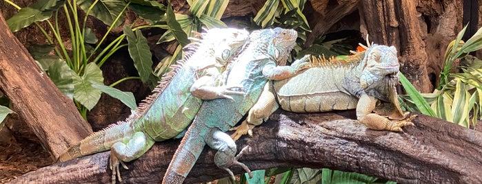 Reptielenhuis De Aarde is one of Locais curtidos por Janneke.