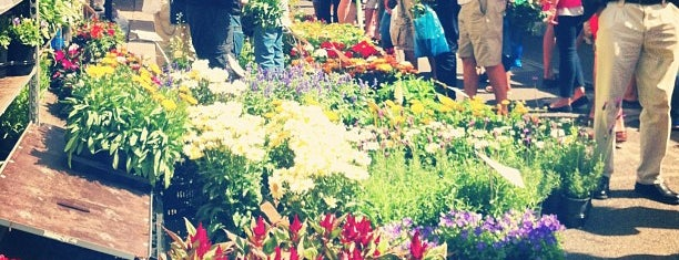 Columbia Road Flower Market is one of London Lifestyle Guide.