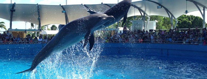 Flipper Dolphin Show is one of Miami.
