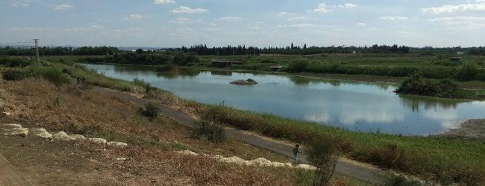 אגמון חפר is one of Orte, die Roman gefallen.