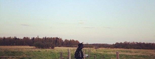 Lammassaari is one of Places to visit in Finland.
