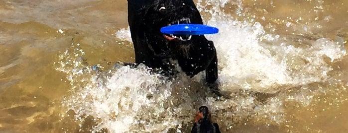 Montrose Dog Beach is one of Lugares favoritos de Sean.
