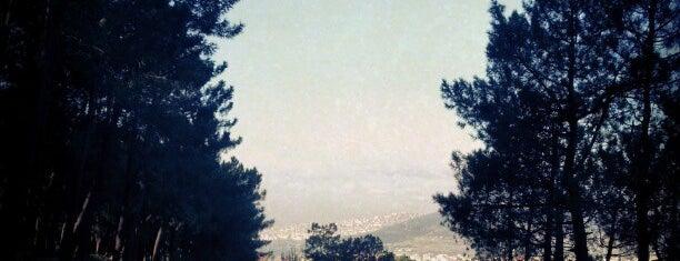 Aydos Ormanı is one of istanbul gezi listesi.