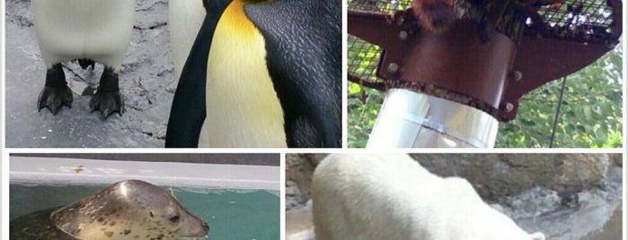 Asahiyama Zoo is one of Posti salvati di ぎゅ↪︎ん 🐾.