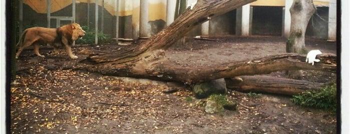 Voormalig Roofdierenverblijf is one of Diergaarde Blijdorp 🇳🇬.