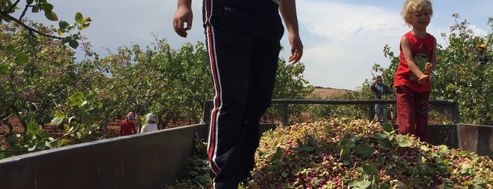 Taşlıça Köyü is one of Lieux qui ont plu à Mehmet.