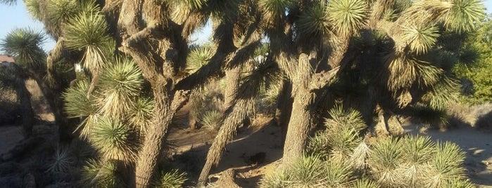 Prime Desert Woodland Preserve is one of Elana : понравившиеся места.