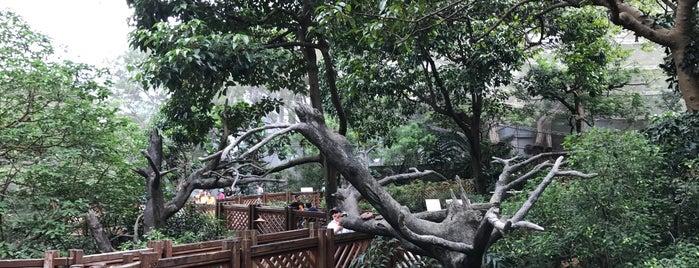 Hong Kong Park Aviary is one of Hong Kong.