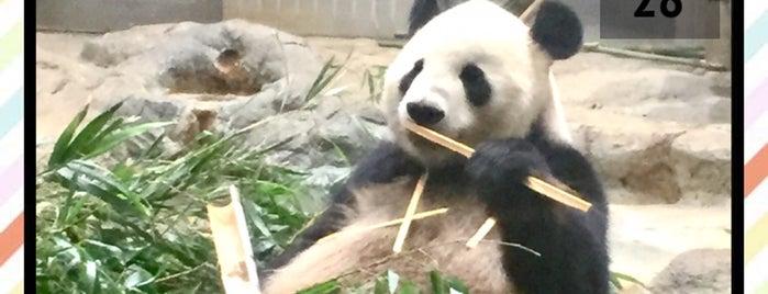 Ueno Zoo is one of Tokyo 2019.