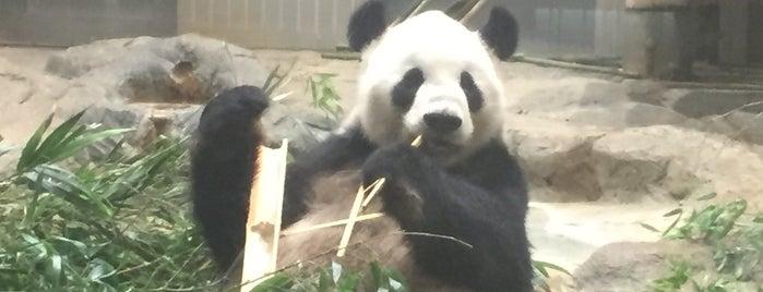 Giant Panda is one of Tokyo 2019.