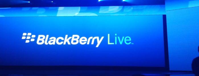 BlackBerry Live 2013 is one of походы за бейджами.