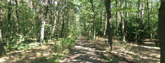 Forst Jungfernheide is one of Gespeicherte Orte von Impaled.