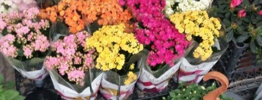 yağmur çiçekçilik is one of Locais curtidos por Emel🦋.