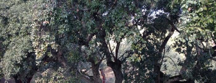 Parque Natural Sierra de Aracena y Picos de Aroche is one of Lieux qui ont plu à Angie.