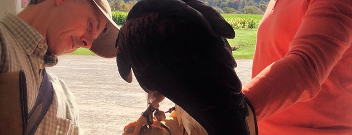 The British School of Falconry is one of Vermont.