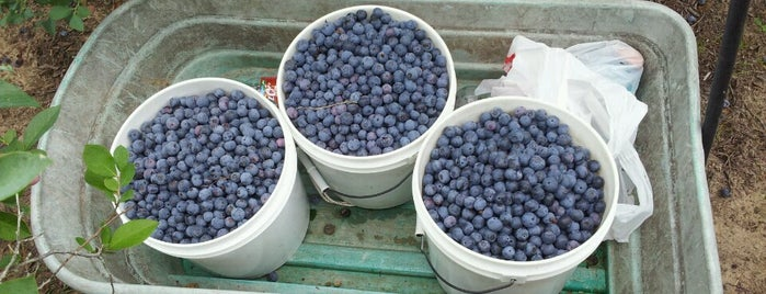 Moorheads Blueberry Farm is one of H•Town.