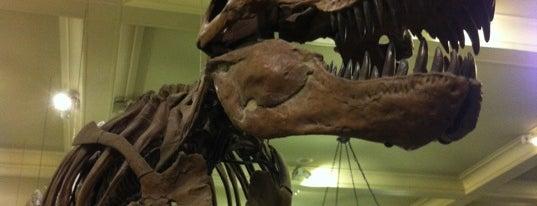 Tyrannosaurus Rex is one of Lugares favoritos de Catalina.