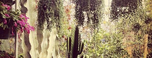 Lucky Plants is one of LA.