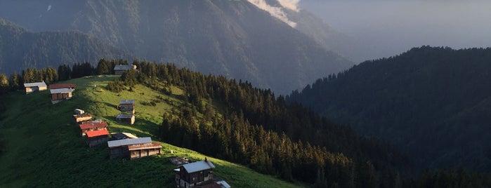 Pokut Yaylası is one of Mountain Resorts In Black Sea Region.