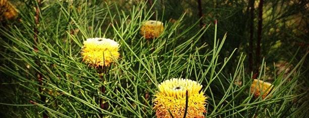 Australian National Botanic Gardens is one of Alexさんのお気に入りスポット.