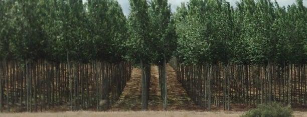 Weird Trees is one of Posti che sono piaciuti a Crispin.