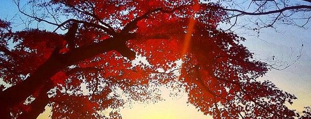 太平山神社 is one of 日本夜景遺産.