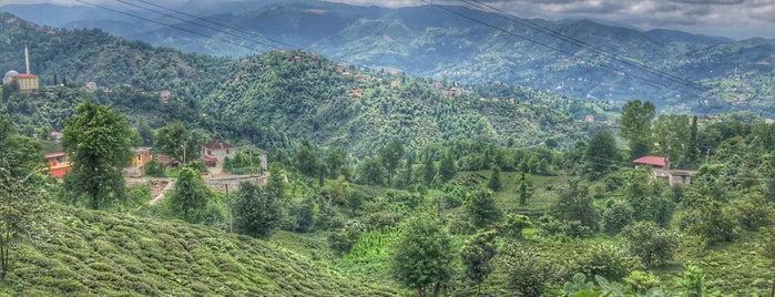 Serince köyü is one of Orte, die Sinan gefallen.