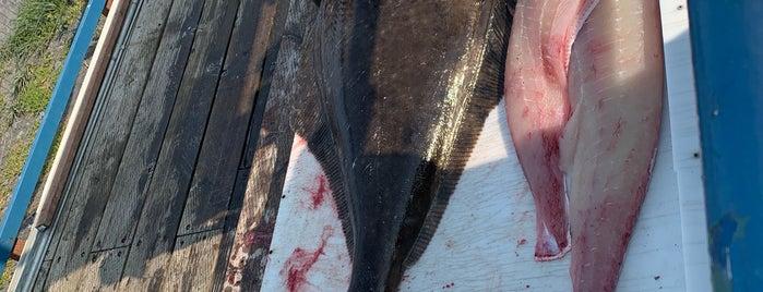 Homer Alaska Halibut Fishing Capital Of The World is one of Tiffany 님이 저장한 장소.