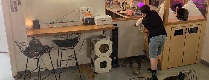 Neko - A Cat Cafe is one of Vallyri'nin Kaydettiği Mekanlar.