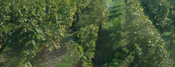 Domaine de la Cote d'Or is one of Geneva wineries.