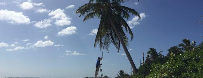 Playa Esperanza is one of Lugares favoritos de Allan.
