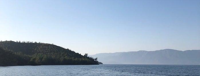 sarıdana koyu is one of Kamp Alanları.