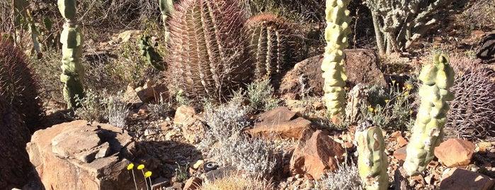 Arizona-Sonora Desert Museum is one of Tucson, Az.