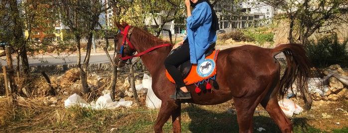 K.Maraş Atlı Binicilik Kulübü is one of Kahramanmaraş.