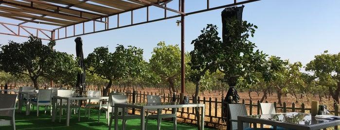 ADA Garden Restaurant is one of AfraAs : понравившиеся места.