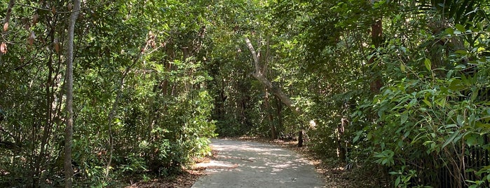 The Barnacle Historic State Park is one of Miami Activities.